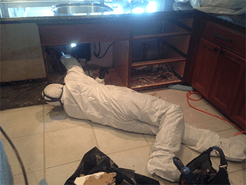 Jacksonville Mold Removal And Remediation Services