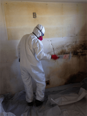 Tomball, TX Mold Removal, Remediation & Inspection Service Company
