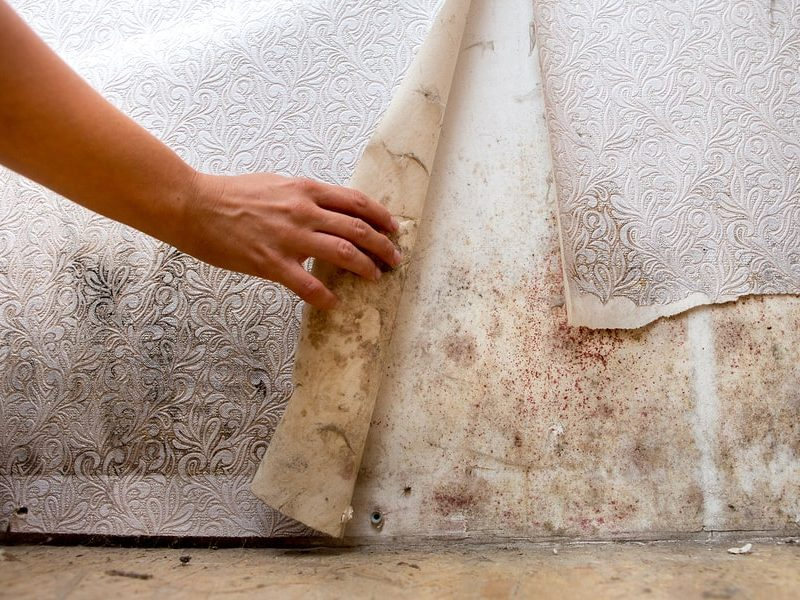 how to prevent mold in Florida