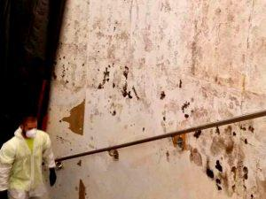 all dry commercial mold remediation removal