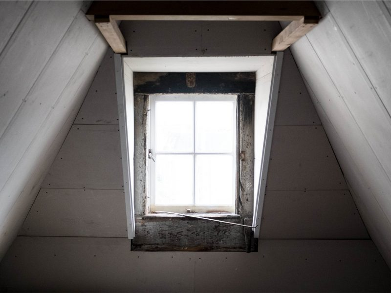 what to look for in mold removal pros