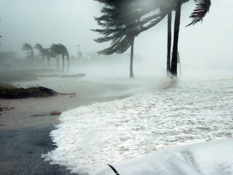 is north carolina's climate prime for property restoration services