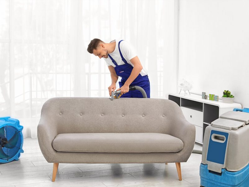 what to do if you found mold on furniture or upholstery