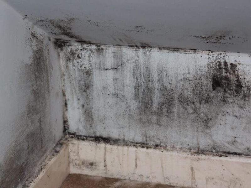 types of mold and their dangers