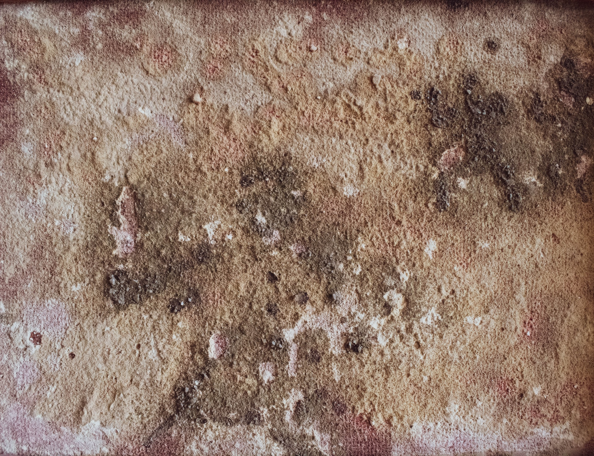 Mold Vs Mildew What Is The Difference