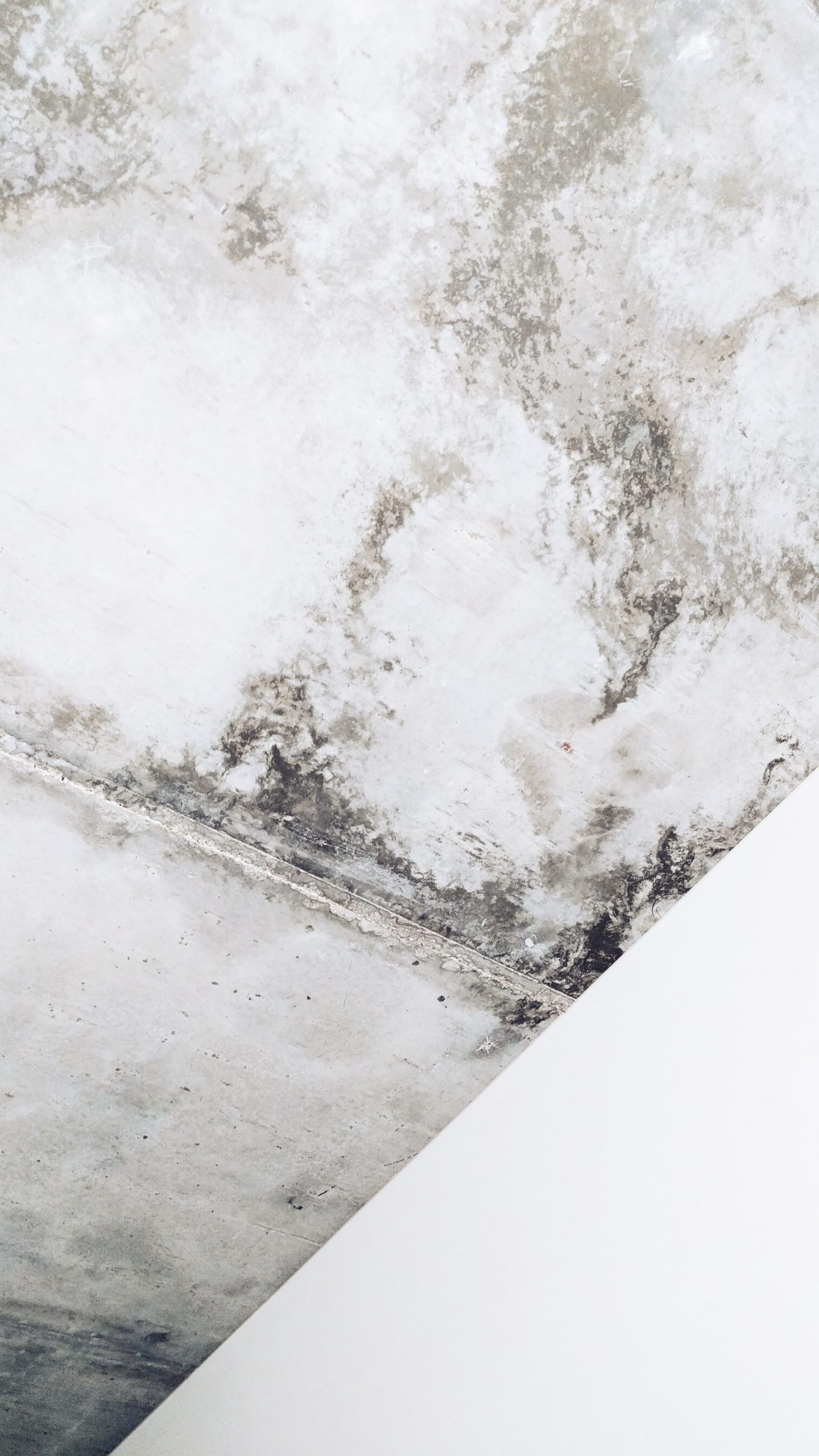 What Happens If You Clean Black Mold