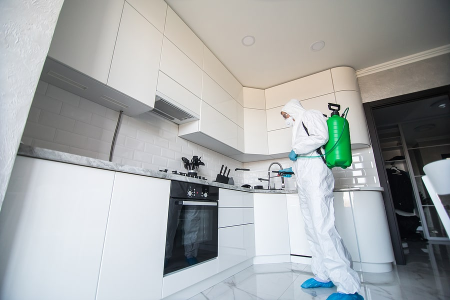 Mold Removal Home Kitchen