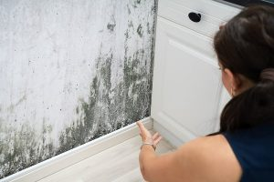 emergency mold removal remediation services