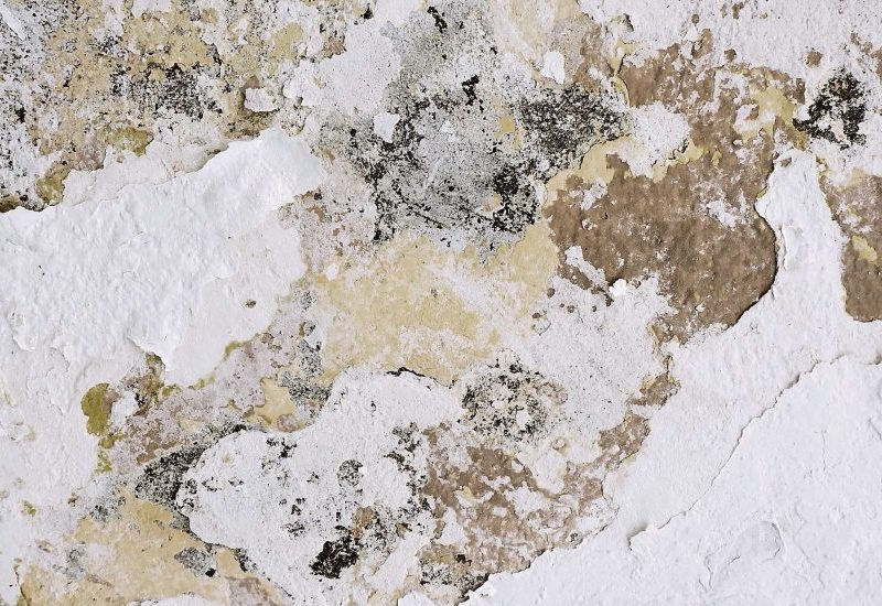 Can You Mix Bleach And Vinegar To Kill Mold