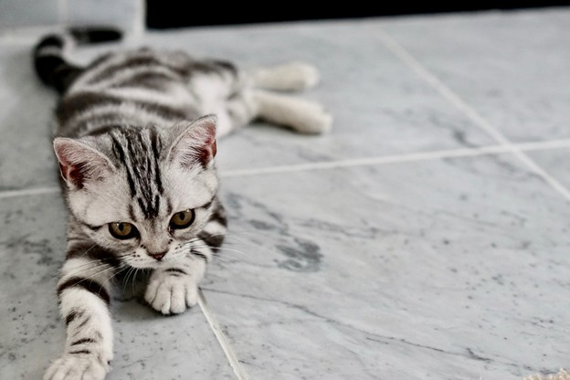 Gray Striped Cat Sitting On A Gray Tiled Floor