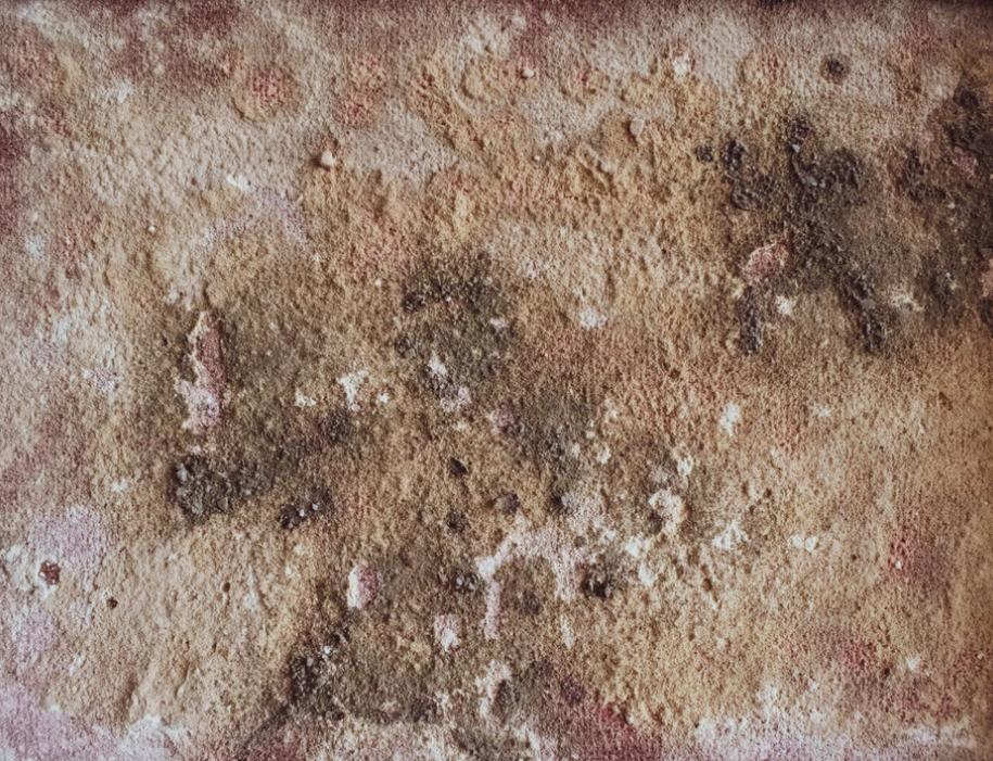 Brown And Red Mold
