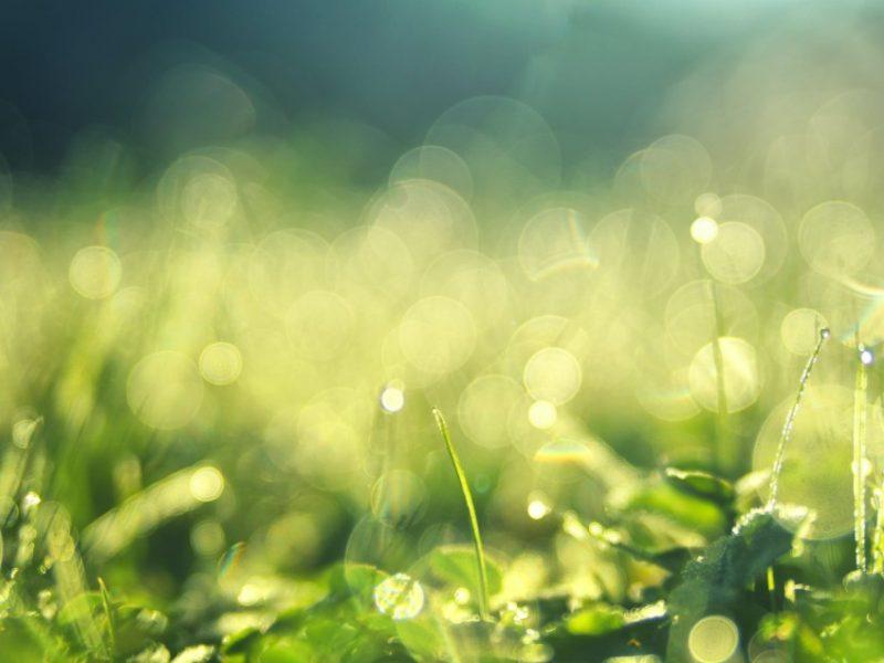Close Up Of Wet Grass